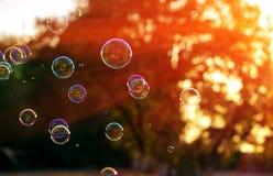 肥皂泡在天的最后阳光下 夏天bokeh 库存照片