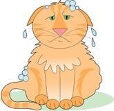 肥皂的猫 库存例证