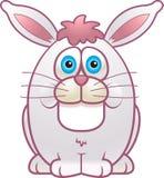 肥胖兔子 免版税库存图片
