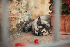 肥腻和滑稽的猫睡觉在地面上和在花盆附近 免版税库存图片