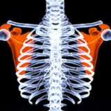 肩胛骨 图库摄影