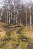 肮脏的乡下公路在早期的春天森林里 免版税图库摄影