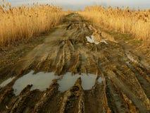 肮脏的农村路 库存图片