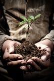 肮脏的手拿着与地球, ecolo的概念的新芽 免版税库存图片