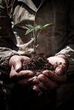 肮脏的手拿着与地球, ecolo的概念的新芽 库存图片