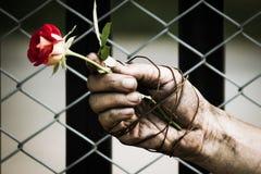 肮脏的手阻塞与玫瑰 栓充满爱 免版税库存照片