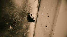 肮脏的昆虫坐窗口在被放弃的大厦、贫穷和一蹶不振 影视素材