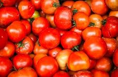 肮脏的未洗的蕃茄 免版税库存图片