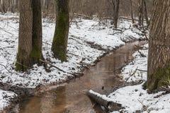 肮脏的森林小河森林 免版税库存图片