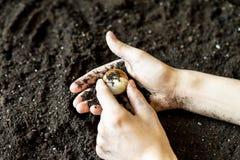 肮脏的泥泞的手发现在土壤地面f的一颗宝石 免版税库存图片