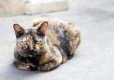 肮脏的猫 免版税图库摄影