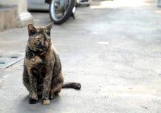 肮脏的猫 库存照片