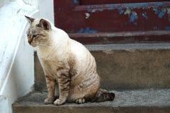 肮脏的猫 图库摄影