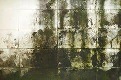 肮脏的生苔砖墙 库存图片