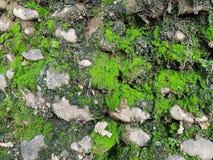 肮脏的老石墙背景 免版税库存照片