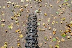 肮脏的自行车轮胎在背景地形 免版税库存照片