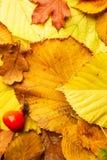 肮脏的黄色秋叶背景概念纹理设计 库存照片