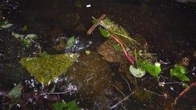 肮脏的水在河 森林河污染 沼泽水在森林河 影视素材