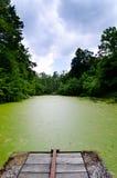 肮脏的绿色池塘 免版税库存图片
