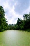 肮脏的绿色池塘 库存图片