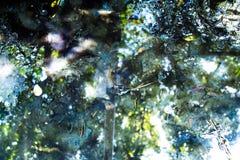 肮脏的水,青苔 库存图片