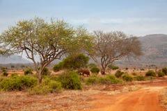 肯尼亚、红色土壤和有些树风景  免版税库存照片