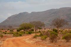 肯尼亚的风景、红色土壤和树和小山 免版税图库摄影