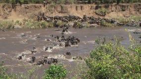 肯尼亚迁移角马 股票视频