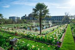 肯辛顿有喷泉和开花的宫殿庭院在春天,伦敦开花 库存图片