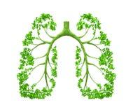 肺结构树 库存照片