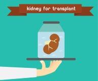 肾脏移植概念 非法器官贸易例证 免版税库存照片