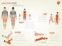 胃肠腿锻炼美丽的设计信息图表  库存照片
