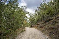 胆汁橡木森林 免版税库存图片