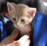 背包小猫 免版税库存图片