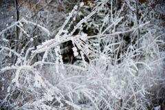 背后照明的弗罗斯特森林 免版税库存图片