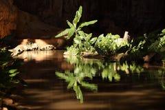 背后照明的绿色植物 免版税库存图片