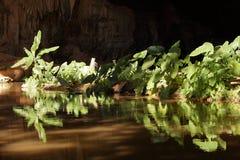背后照明的绿色植物 库存照片