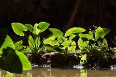 背后照明的绿色植物 免版税图库摄影