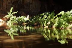 背后照明的绿色植物 免版税库存照片