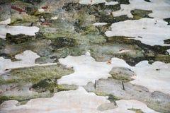 背景、纹理,美国梧桐抽象绿色和灰色吠声  免版税图库摄影