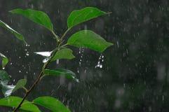 背景下降雨向量 免版税库存图片