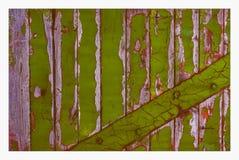 背景与削皮的老木土气,绿色门细节  免版税库存图片