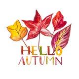背景与红色,橙色,棕色和黄色秋叶的水彩例证 你好秋天 免版税库存图片