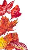 背景与红色,橙色,棕色和黄色秋叶的水彩例证 免版税图库摄影