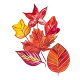 背景与红色,橙色,棕色和黄色秋叶的水彩例证 免版税库存图片