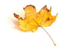 背景五颜六色的叶子线路mapple亮光 库存照片