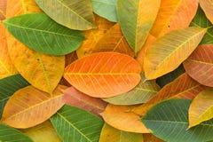 背景五颜六色的叶子 免版税库存图片