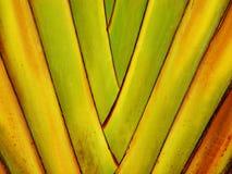 背景五颜六色的棕榈树 免版税库存照片