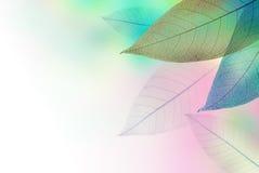 背景五颜六色的花卉框架 库存图片