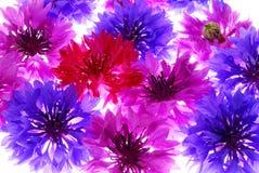 背景五颜六色的花 免版税库存图片